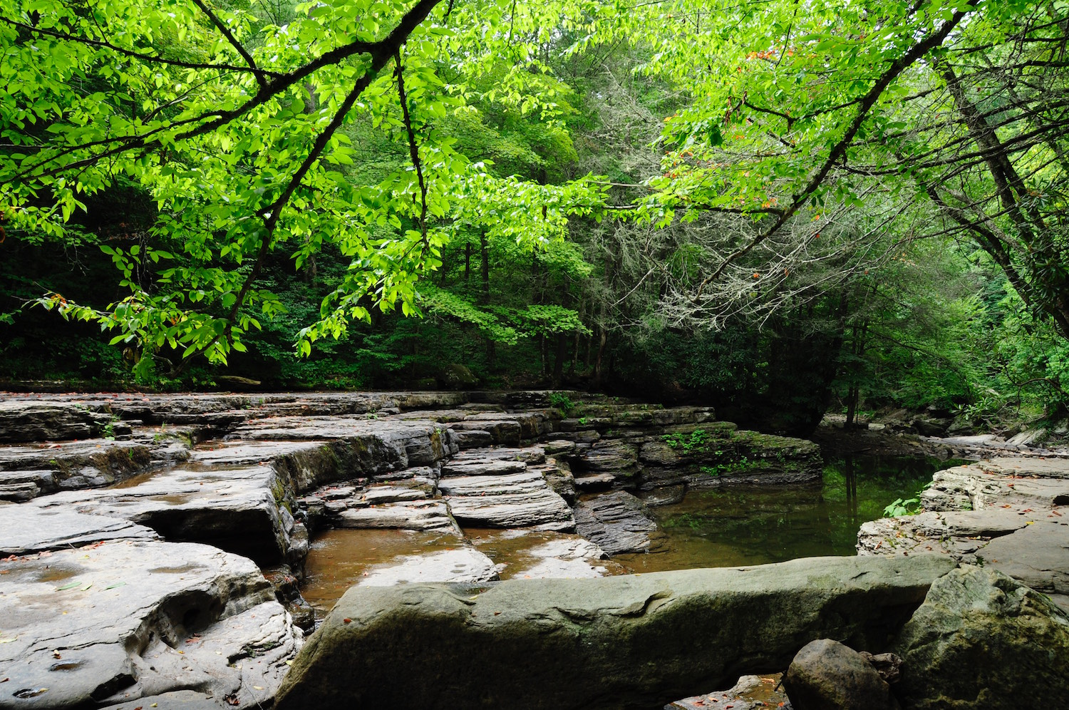 Camp Creek Wv >> Camp Creek State Park And Forest West Virginia State Parks