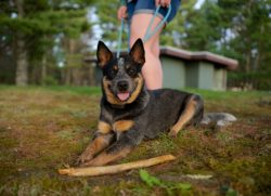 Wv State Parks Offer Pet Friendly Cabins For You And Your